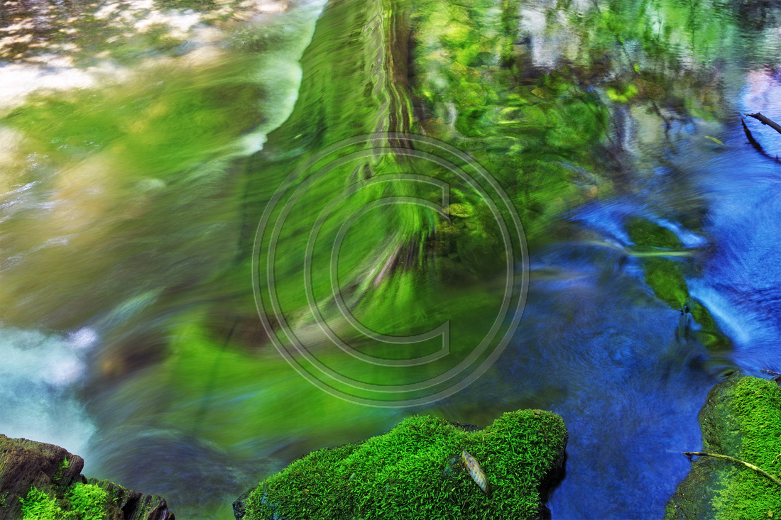 Reflections in water stream: Muir Woods