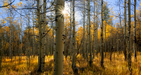 Aspen Grove: South Lake Tahoe